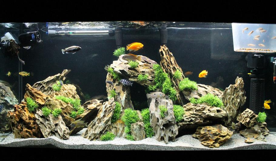 Aquascaping With African Cichlid - Enter Inspiration